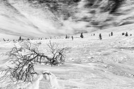 Pallas-Ylläs Nationalpark