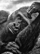 Tierparkmelancholie